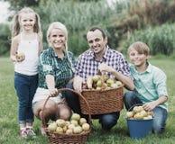 Family harvesting apples in garden Royalty Free Stock Images