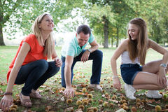 Family harvesting chestnuts Royalty Free Stock Images