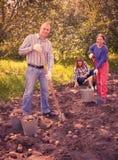 Family harvesting potatoes in field stock image