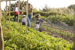 Family Harvesting Produce From Allotment Together Stock Images