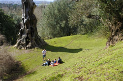 Family having a picnic in Cornwall Park, Auckland New Zealand Royalty Free Stock Images