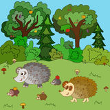 Family of hedgehogs walk on a forest glade Stock Photos