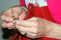 Family heirloom. Mature female holding a family heirloom in her hands stock images
