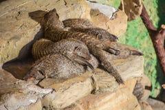 Family hibernation stock images