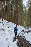 Family hikers walking through pine forest on winter Royalty Free Stock Photos