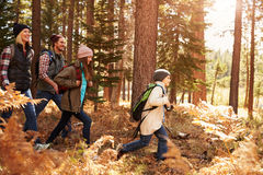 Family hiking through a forest, Big Bear, California, USA Stock Image