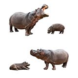 Family hippos with babes. Two pairs of family hippos and babes with different emotions royalty free stock photography