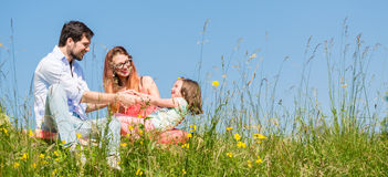 Family holding hands in summer in the grass Stock Photos