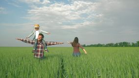 Family holiday, cheerful parents with child boy on shoulders spinning and having fun during walk in green grain field. Against sky stock footage
