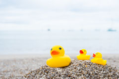Family holiday concept with rubber ducks walking. Family holiday concept with rubber duck and duckling walking on the beach royalty free stock photography