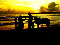 Family and horse on beach silhouette Royalty Free Stock Photography
