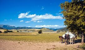Family horses Royalty Free Stock Photo