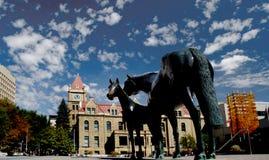 Family of Horses, Calgary. Royalty Free Stock Image