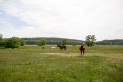 Family horses on a green meadow Stock Photo