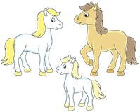Family of horses. A white horse, a little foal and a courser, vector illustrations in funny cartoon style Stock Image