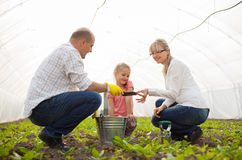 Family in the hothouse Stock Images