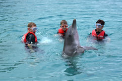 Family interact with Dolphin Royalty Free Stock Photos