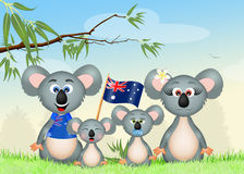 Family of koalas Stock Image