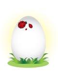Family of ladybugs on the egg. Royalty Free Stock Photography