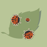 family of ladybugs Royalty Free Stock Photos