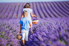 Family in lavender summer field Stock Image