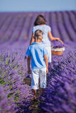 Family in lavender summer field Stock Images