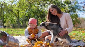Family leisure, husky dog licks face kid with apple in hands sitting with mom in autumn park on background of trees. Family leisure, husky dog licks face kid stock footage