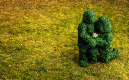 Family of live bushes. Outdoor fairy tale style photo. Stock Photography