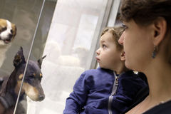 Family looking at dogs Royalty Free Stock Image