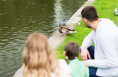 Family looking at duck at summer pond in park. Family, parenthood, leisure and people concept - family looking at duck at summer pond in park stock photos