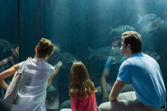 Family looking at fish tank Stock Photo