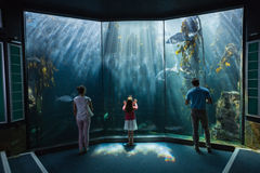 Family looking at fish tank Royalty Free Stock Image