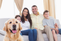 Family of looking at Golden Retriever Royalty Free Stock Image