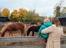 Family looking at horses Royalty Free Stock Photos