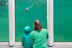 Family looking at penguins. Family watching penguins in the zoo Royalty Free Stock Photo