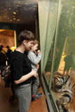 Family looking at tiger Royalty Free Stock Photos