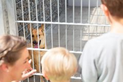 Family looking to adopt a pet from animal shelter. Watching the poor pet in cage Royalty Free Stock Photo