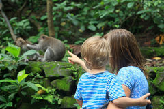 Family looking at wild monkey Royalty Free Stock Photos