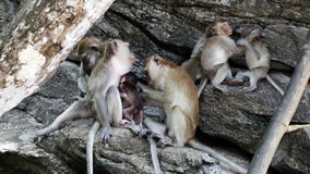 Family of macaques relaxing on logs outdoor stock video