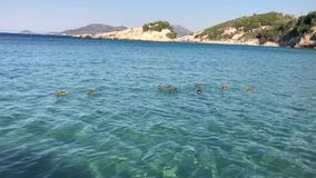 Ducks Swimming in Sea. Family of mallard ducks are swÅŸmming on sea in Kokkari, Samos Island, Greece, on July 13, 2019 stock video footage