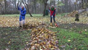 Family man and woman rake leaves together in backyard. 4K stock video