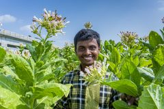 A Tobacco worker smiling in outside of Dhaka, Vatara, manikganj, Bangladesh. stock images