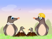 Family moles Stock Images