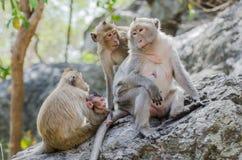 Family of monkey Royalty Free Stock Photos