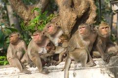 Family of monkeys. Are sitting on the wall at Khao Wang Phetchaburi province Thailand Royalty Free Stock Image