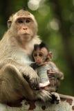 Family of monkeys stock images