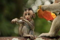 Family of monkeys Stock Image