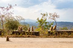 Family of monkeys sitting on the road side stock photo