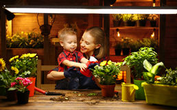 Family mother and baby grow flowers, transplant seedlings in gar. Family mother and baby son grow flowers, transplant seedlings in the gardeners greenhouse Royalty Free Stock Photo