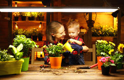 Family mother and baby grow flowers, transplant seedlings in gar. Family mother and baby son grow flowers, transplant seedlings in the gardeners greenhouse Stock Image